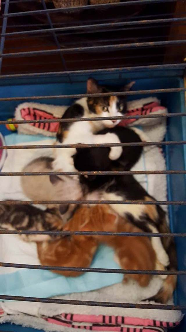 Principessa e suoi cuccioli
