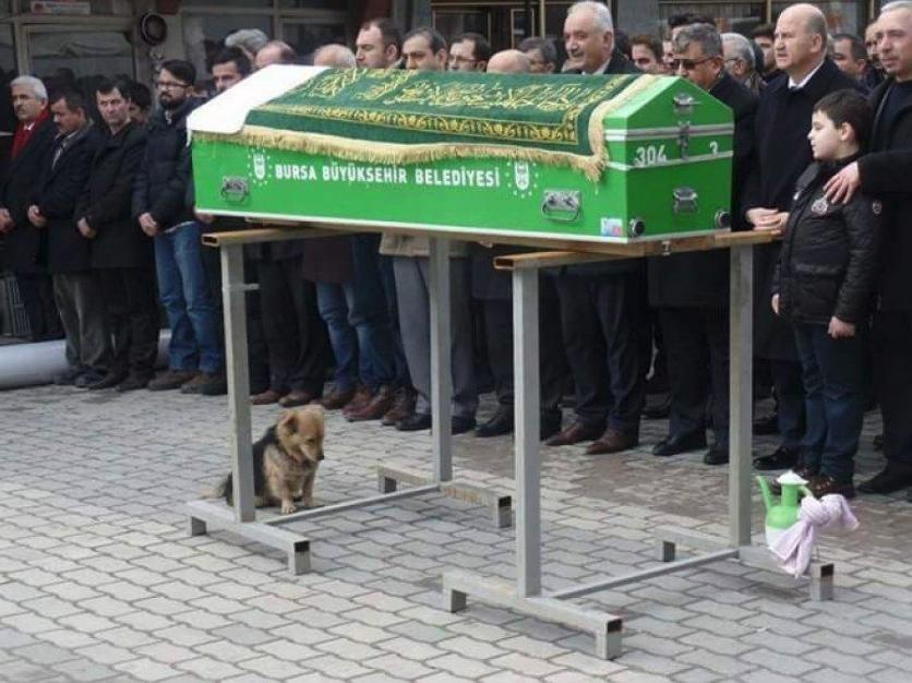 Perro en el funeral