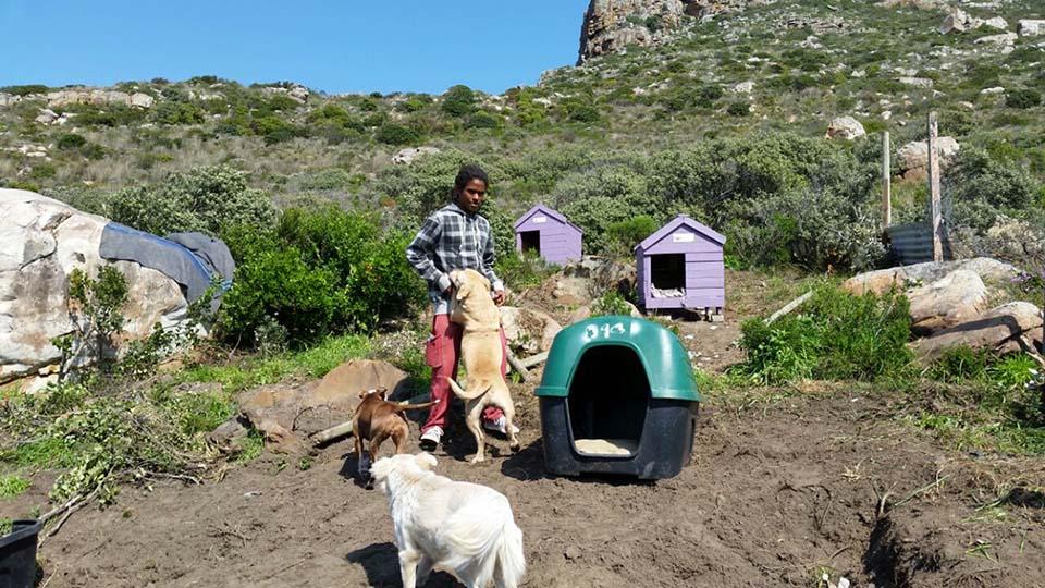 Shaygam Newman y sus perros