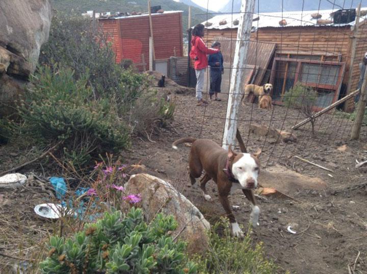 Shaygam ayuda a los animales sin hogar