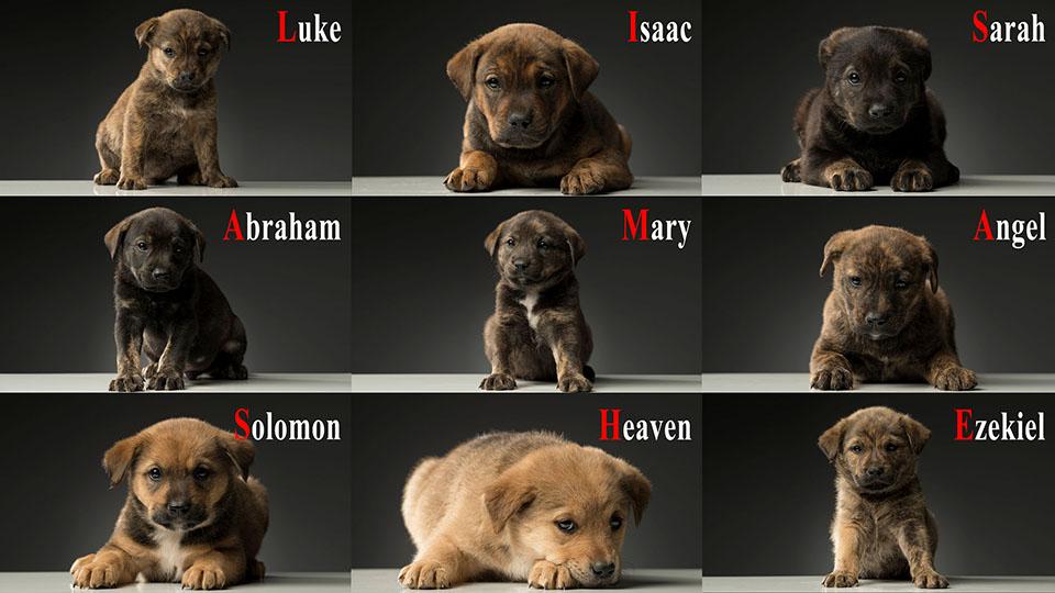 Cachorros rescatados de la cueva