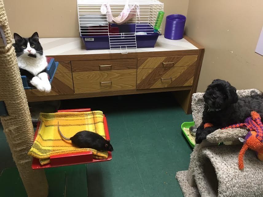 Perro, gato y rata