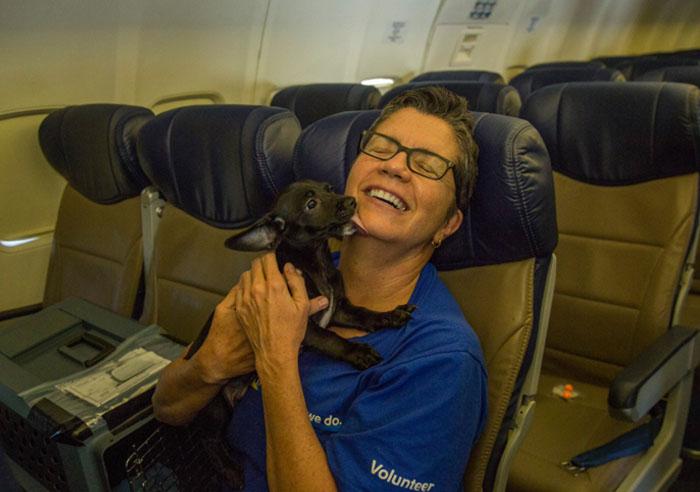 Aerolínea ayuda a perros y gatos rescatados