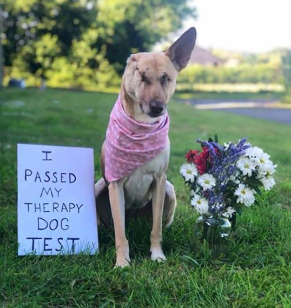 Cão cego passa no teste para ser cão de terapia