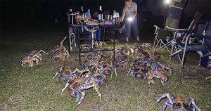 Una multitud de cangrejos gigantes decidió aparecerse en un picnic familiar