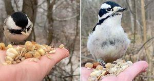 Fotógrafo graba videos alimentando pájaros de su mano y los captura en cámara lenta
