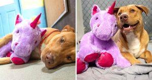 Perro intenta robar cinco veces unicornio peluche