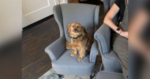 Perro no deja sonreír conseguir silla juego mamá