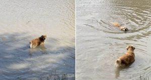 Perro temeroso del agua tiene a su amiga