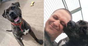 Perro dulce de un refugio espera ser adoptado
