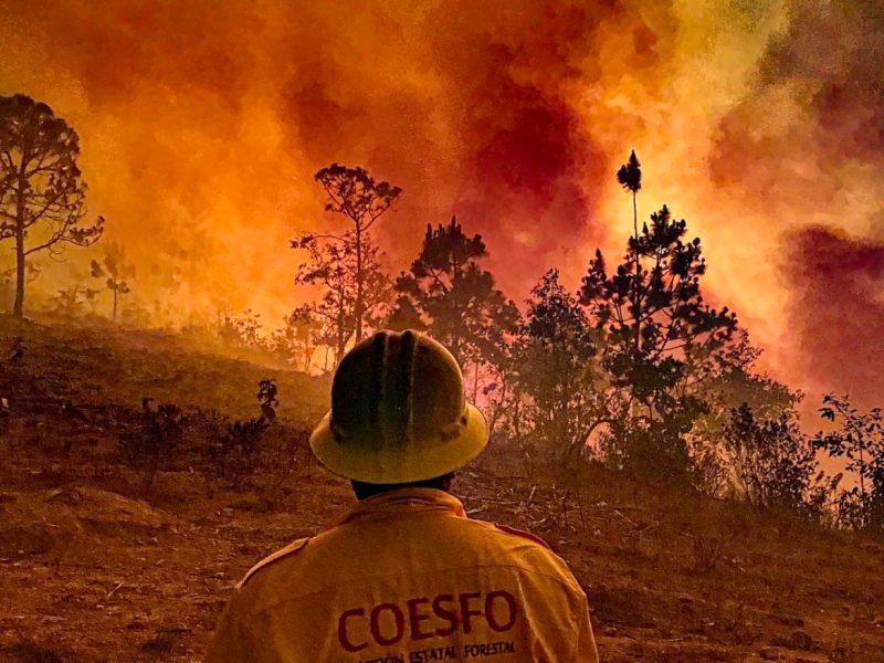 8 Incendios Oaxaca_Foto Zona roja
