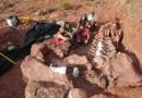 Hallan en Argentina fósiles de un enorme dinosaurio Ninjatitan que vivió hace 140 millones de años