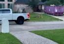 Un tigre fue visto merodeando en un vecindario de Houston. ¿Qué estaba haciendo ahí? Esto es lo que sabemos