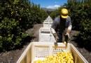 México reclama a Estados Unidos que cumpla leyes laborales en favor de trabajadores agrícolas
