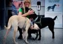 Los CDC prohíben la entrada de perros de países con alto riesgo de rabia; estos son los países de Latinoamérica que están en la lista