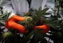 Esta empresa de cannabis es una nueva favorita de Reddit