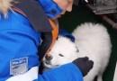 Rescatan a un perro que estuvo deambulando durante más de una semana en el hielo del Ártico