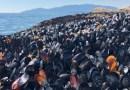 El calor extremo cocinó vivos a los mejillones, almejas y otros mariscos en las playas de Canadá