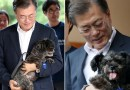 El presidente de Corea del Sur dice que es hora de considerar la prohibición de comer carne de perro