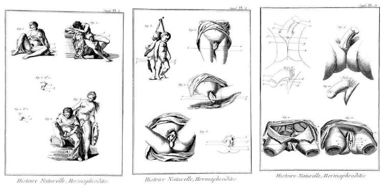 Hermaphrodite 10 Biological
