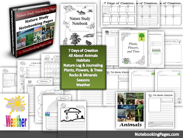 Nature Study Notebooking Pages - 10 Easy Nature Study Ideas Anyone Can Enjoy