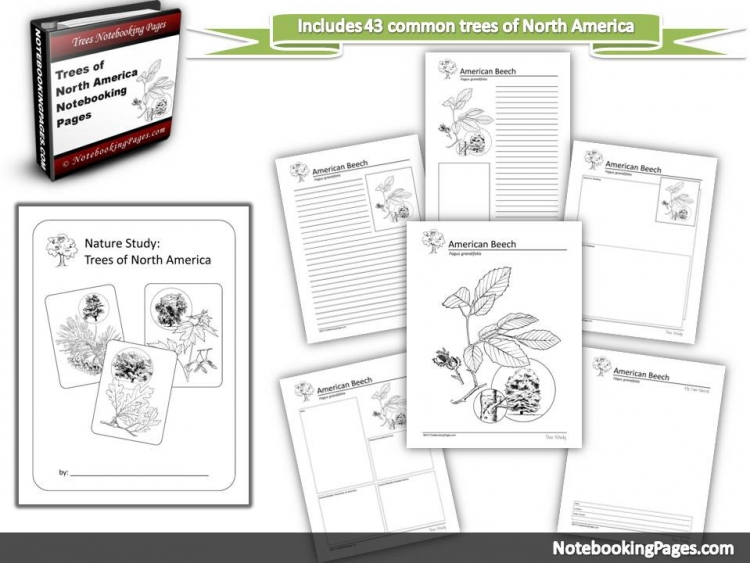 North American Trees Notebooking Pages
