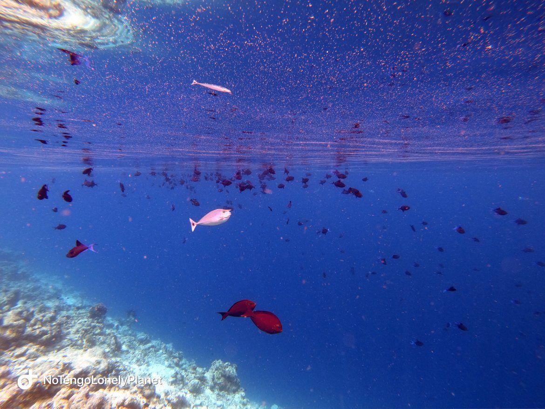 snorkel 2 Dhigali Maldivas