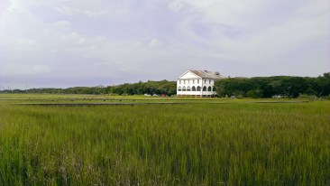 Marsh grasses of Pawleys Island.