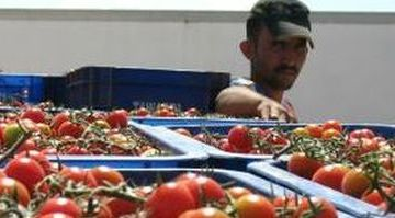 Spanish farmers concerned about EU deal for occupied Western Sahara – wsrw.org
