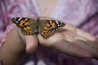 Generación de la Amistad saharaui: La mariposa |Por Limam Boisha