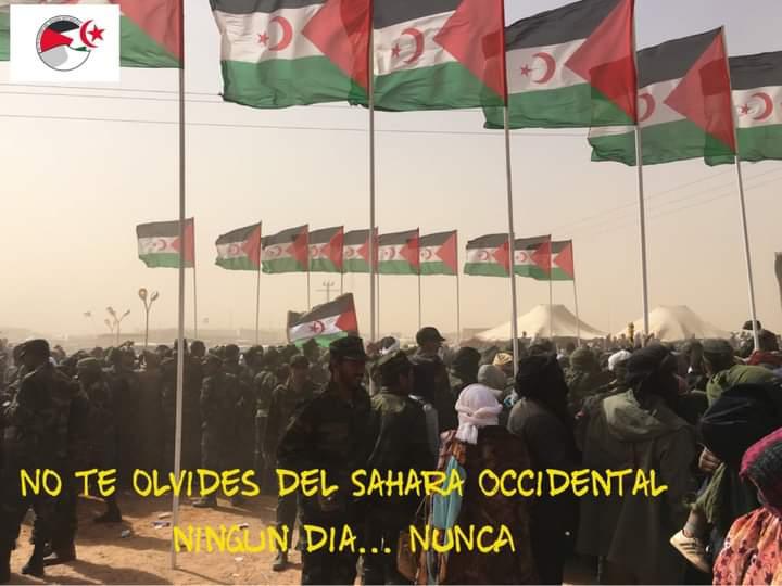 El Consejo de Seguridad de la ONU debate la situación en el Sáhara Occidental – resumen de la reunión del 14 de octubre
