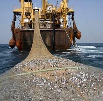 WSRW dénonce la reprise des exportations du poisson congelé du Sahara occidental occupé | Sahara Press Service