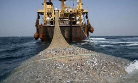 Se sigue exportando pescado congelado del Sahara Occidental ocupado, advierte una ONG | Sahara Press Service
