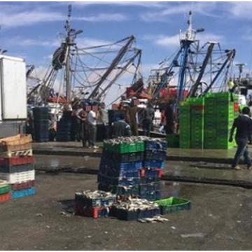 Equipe Media Sahara | A pesar de la guerra, continúan las exportaciones de harina y aceite de pescado – El Salto