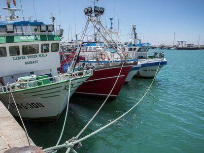 La justicia europea da la razón al Polisario y ordena anular los acuerdos de comercio y pesca entre Marruecos y la UE | Internacional | EL PAÍS