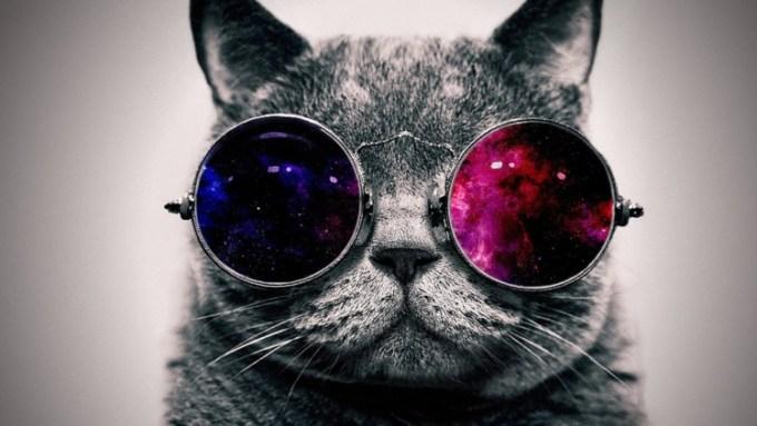 Deskripsi tentang kucing