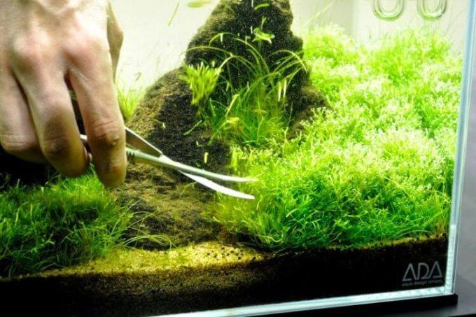 kumpulan tips merawat aquascape
