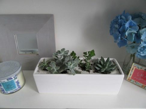 succulent-planter