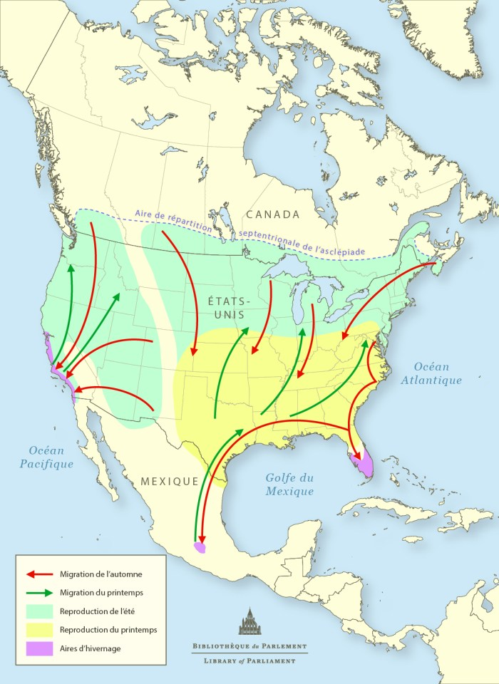 Carte des voies migratoires du monarque en Amérique du Nord