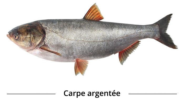 Carpe