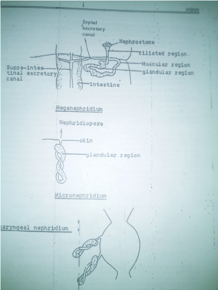 Electric Components Science Ncert Notes Tet Success Key