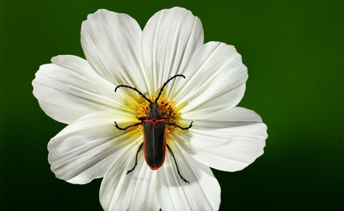 betle-on-white-flower_WEB_1860x1140