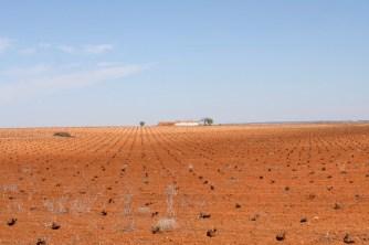 Typical landscape in, Castilla-La Mancha, Spain