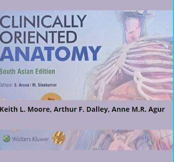 Read more about the article Clinically oriented Anatomy 10th edition PDF [Free download]