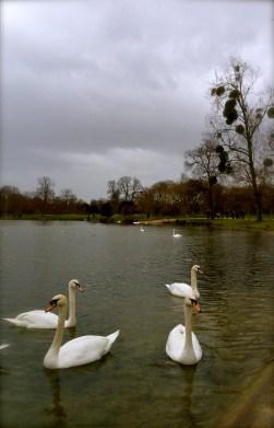 Bois de Vincennes...the large park near where I lived.