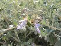silver bushes3 31-3-15