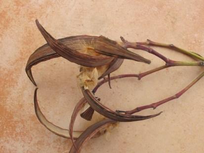 elfa seeds1 6-4-15