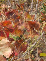 grape 15-12-15
