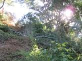 a fallen branch 23-9-15