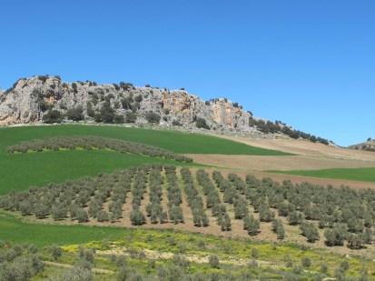 olives-rocks